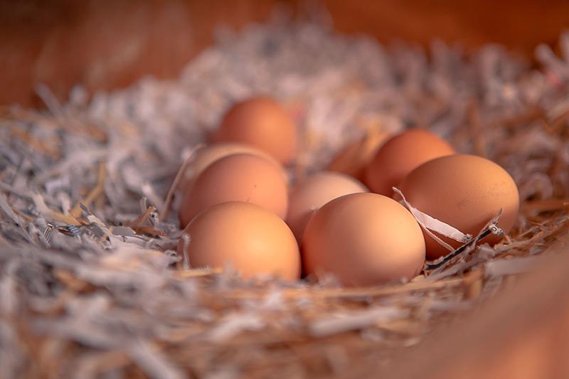 Las Vegas Livestock - Eggs